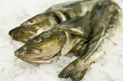Alimento di pesci del merluzzo Fotografia Stock Libera da Diritti
