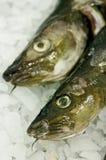 Alimento di pesci del merluzzo Fotografie Stock Libere da Diritti