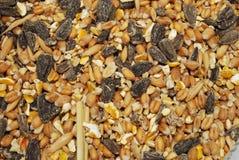 Alimento di uccello selvaggio (cereali e) Fotografia Stock Libera da Diritti