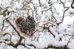 Alimento di uccello su un salice fotografie stock libere da diritti