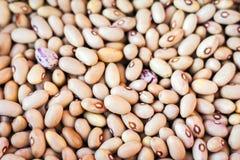 """Alimento do †do Phaseolus do fundo dos feijões brancos """"para vegetarianos imagens de stock"""