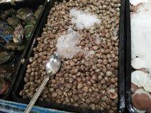 Alimento do mar que é preservado com líquido refrigerante foto de stock
