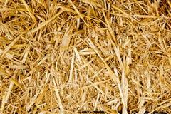 Alimento dorato del ruminante di struttura della paglia della balla Fotografie Stock Libere da Diritti