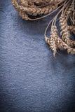 Alimento dorato delle orecchie della segale e del grano e concetto della bevanda Immagini Stock