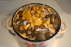 Alimento dos produtos do cogumelo dos cogumelos que cozinha a cozinha Foto de Stock