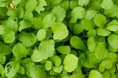 Alimento dos vegetais Imagem de Stock