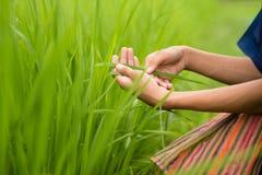 Alimento e sano con qualità Fotografia Stock Libera da Diritti