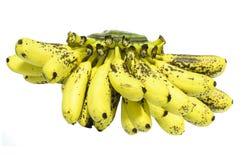 Alimento facilmente digeribile Fotografia Stock