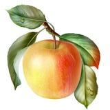 Alimento, frutta, mela Fotografie Stock Libere da Diritti