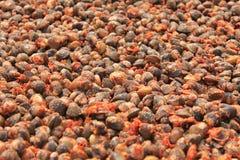 Alimento locale cambogiano Fotografia Stock