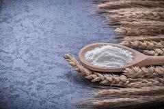 Alimento maturo delle orecchie del grano della farina di legno del cucchiaio e concetto della bevanda Immagine Stock
