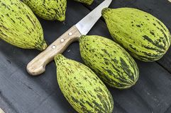 Alimento minuscolo crudo e non maturo del melone per perdere peso, intestini del melone di funzionamento, vitelli ipocalorici, Immagini Stock Libere da Diritti