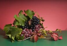 Alimento multicolor de la uva Fotografía de archivo