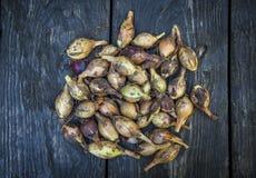 Alimento natural, cebola amarela em uma tabela de madeira foto de stock
