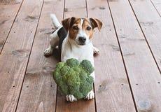 Alimento natural para o conceito do animal de estimação Fotos de Stock