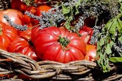 Alimento natural, tomates Imágenes de archivo libres de regalías