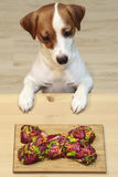 Alimento naturale per i cani Fotografia Stock