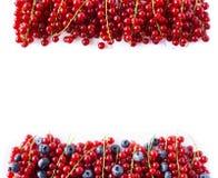 Alimento nero e rosso su un bianco Mirtilli e ribes rosso maturi su un fondo bianco Bacche miste al confine dell'immagine con la  Fotografia Stock Libera da Diritti