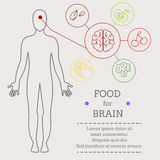 Alimento para cérebros Fotografia de Stock
