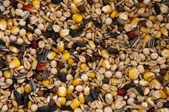 Alimento per gli uccelli Fotografia Stock