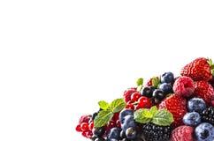alimento Preto-azul e vermelho em um branco Amoras-pretas maduras, mirtilos, corintos, framboesas, morangos com hortelã em um bac Imagem de Stock Royalty Free