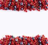 Alimento preto e vermelho em um branco Mirtilos maduros e corintos vermelhos em um fundo branco Bagas misturadas na beira da imag Imagem de Stock Royalty Free