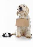 Alimento que espera del perro blanco para Fotos de archivo libres de regalías