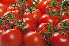 Alimento rojo del tomate Fotografía de archivo libre de regalías