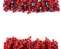 Alimento rosso e blu su un bianco Mirtilli e ribes rosso maturi su un fondo bianco Bacche miste al confine dell'immagine con la c Fotografia Stock Libera da Diritti
