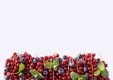 Alimento rosso e blu su un bianco Mirtilli e ribes rosso maturi su un fondo bianco Bacche miste al confine dell'immagine con la c Fotografie Stock Libere da Diritti