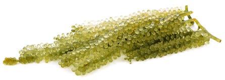 Alimento sano del mazzo dell'uva delle alghe fotografia stock