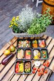 Alimento sano e concetto di dieta, consegna del piatto del ristorante Porti via del pasto di forma fisica Immagini Stock
