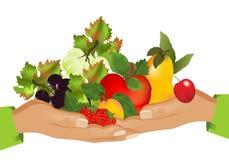 Alimento sano (frutas), vector de los cdr ilustración del vector