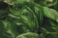 Alimento sano organico naturale, foglia dell'erba del basilico Immagine Stock