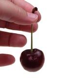 Alimento: Singola ciliegia Immagine Stock Libera da Diritti