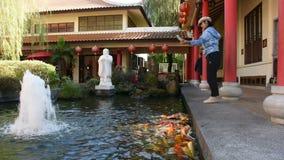Alimento tailandês da visita e da alimentação do curso da mulher para gostar da carpa na lagoa do jardim chinês em Udon Thani, Ta filme