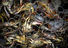 Alimento tailandês do caranguejo Fotos de Stock