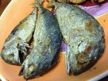 Alimento tailandese Immagine Stock