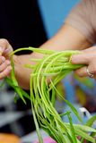 Alimento tailandese - frittura #6 di Stir Immagini Stock Libere da Diritti