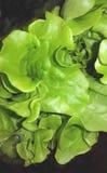 Alimento vegetariano La lattuga ha isolato Fotografia Stock