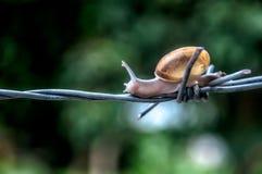 Alimentos da rua - calamar grelhado Imagem de Stock