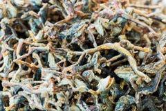 Alimentos de preparación rápida fritos de las pequeñas ranas de alto valor proteico en Asia fotografía de archivo