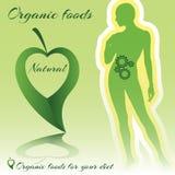 Alimentos orgânicos ilustração stock