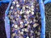Alimentos orientales del bazar - hierbas Fotos de archivo