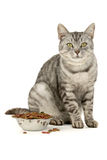 Aliments pour chats photographie stock
