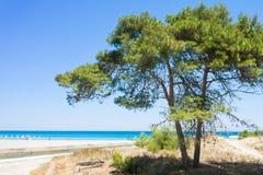 Alimini groß, Apulien - ein Tannenbaum am Strand von Alimini Gran lizenzfreie stockbilder