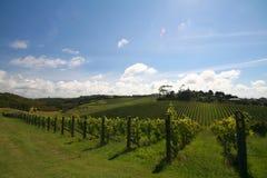 Alineación del viñedo Foto de archivo
