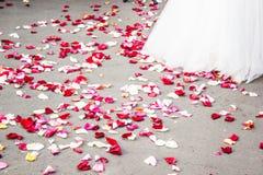 Alineada de boda con los pétalos Imagenes de archivo