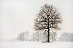 Alineada del invierno Fotos de archivo libres de regalías