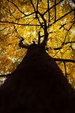 Alineada del otoño Fotografía de archivo libre de regalías